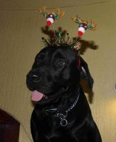 sir bronx christmas puppy by nesslauncher1