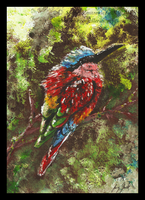 Northern Carmine Bee-eater by SunStateGalleries
