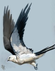 Swallow Tailed Birb by ALRadeck