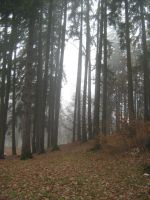 UNRESTRICTED - November '09 - Foggy Forest 14 by frozenstocks