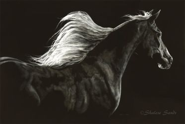 Soaring Spirit - Scratchboard by ShaleseSands