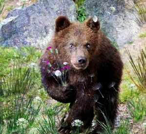 Sweety Bear  by LindArtz