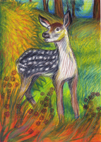 White-tailed deer by stormkeeper