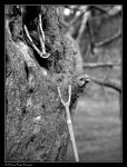BLOOD AND BONE (2009 11260011 #1a BW) by Chattering-Magpie