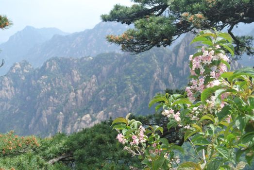 Blossom on Yellow Mountain's Peak by AnimeVeteran
