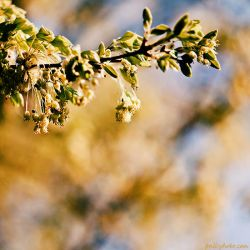 sunny spring by Frall