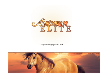 Ae Set by VIP-EquineArt