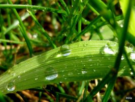 water drops on grass by Lionpelt-66