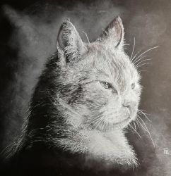 cat by Yakise