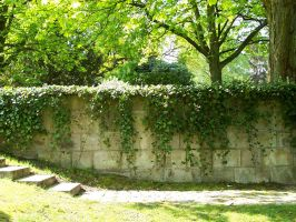 Wall with Ivy and Stairs by ValerianaSTOCK