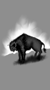 buffalo by FPortugal