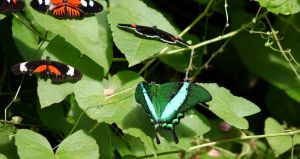 Green Butterfly by PamplemousseCeil