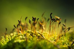 From The Forest Floor by JoniNiemela