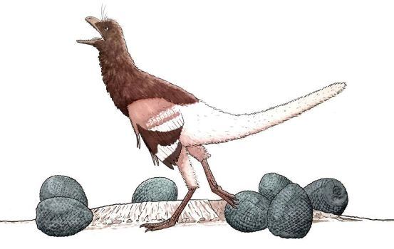 An obsessive Eosinopteryx struts around the nest by ZEGH8578