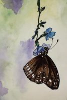Watercolour Butterfly Painting by Cecilia-Pekelharing