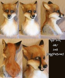 July Red Fox by Magpieb0nes