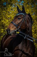 Stormy Groom (GER) by martinahavlinova