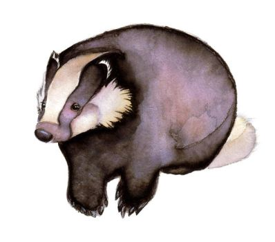 European Badger by WingChant