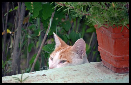 Waiting Willie by remousse