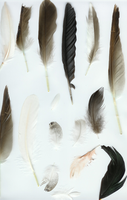 Feather Package 2 by Breyer-Stock