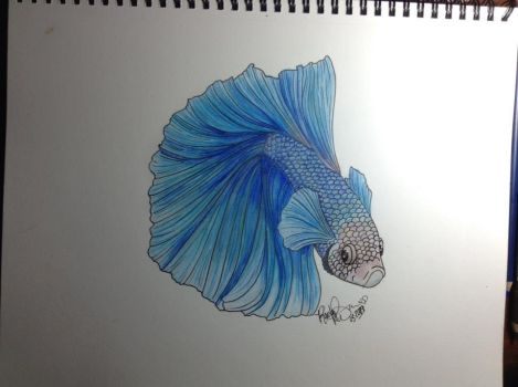 Betta by beachgecko
