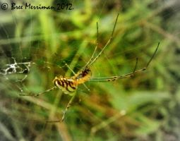 Spider by BreeSpawn