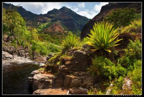 Agave's Throne by aFeinPhoto-com