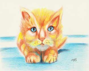 Marcus the Cat Orange Tabby by ilikecokekd