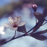 Spring by Pamba