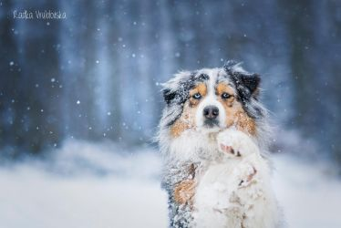 Love snow..and aussies by aussiefoto