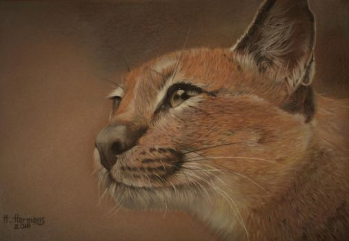 Caracal 2 by HendrikHermans