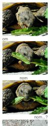 Eating Lettuce by Cleonor
