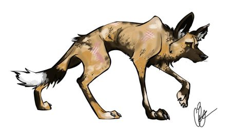 African Wild Dog by Clairictures