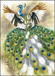 Piebald Peacock by windfalcon