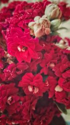 Little roses by loveautumnandnature
