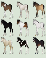 Foal Adoptables Batch - CLOSED by Anonymous-Shrew