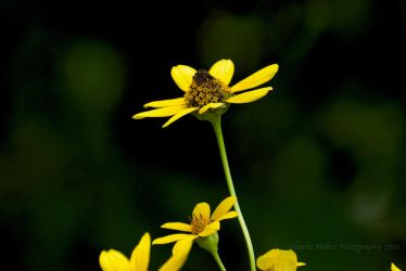 Yellow Flower by Charlief43