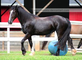 black horse fresian cross 2 by venomxbaby