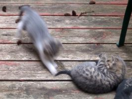 Tail pounce by Ripplin
