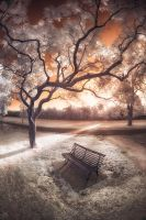 The Final Hours - Infrared by SteveCampbell