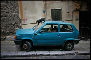 Cat On Car by mia77