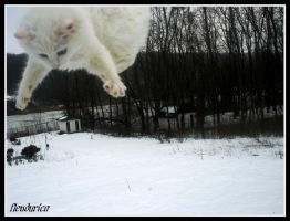 My cat fly by flendurica
