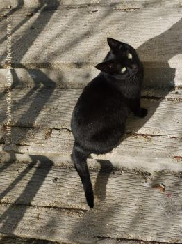 My Black Cat on the stairs by mickwouai