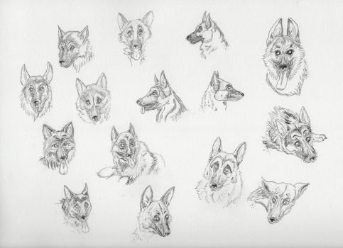 German Shepherd Dog sketches by casinuba