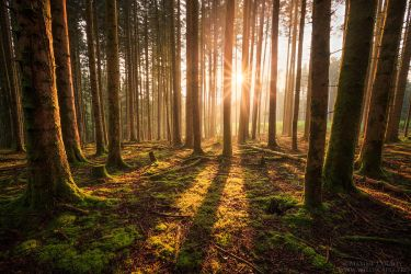 Time to Shine by MaximeCourty