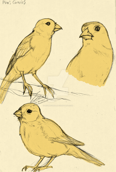 Miner's Canary sketches by LeoMitchell