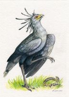 Secretary Bird Stomp by windfalcon