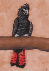 Red Tailed Coackatoo ATC by LuvLoz