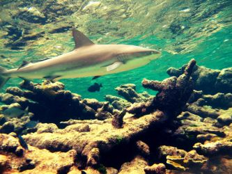 The beauty of the sea a Shark by VGPhotography9