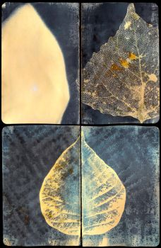 Cyanotypes by ratpat13